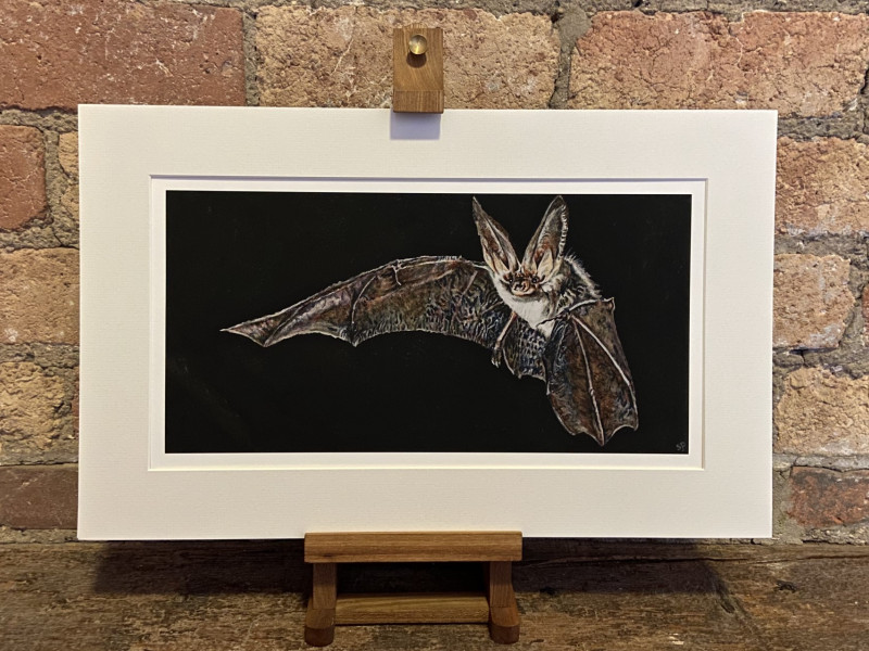 Bat Prints Now On Sale